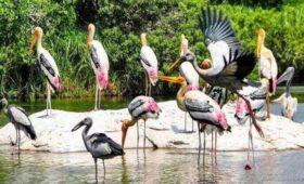 kumarakom bird santury